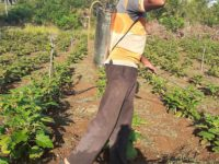 Farmer spraying pesticide in Sri Lanka