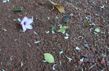 A purple flower dropped under a tree