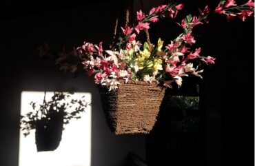 flowers and shadow - photo by Ajith Perakum Jayasinghe